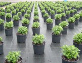 Агротекстиль 4,2х100 GROUNDCOVER AGROJUTEX 100